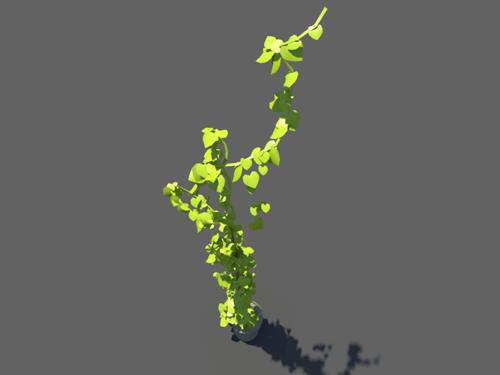 Ivy-plant-single-3d-model-2