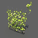 Ivy-plant-3d-model-1