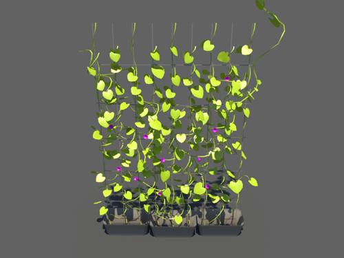 Ivy-plant-3d-model-4