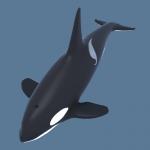 killer-whale-orca-3d-model-2