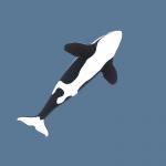 killer-whale-orca-3d-model-4