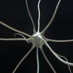 neural-micro-cell-3d-model-4