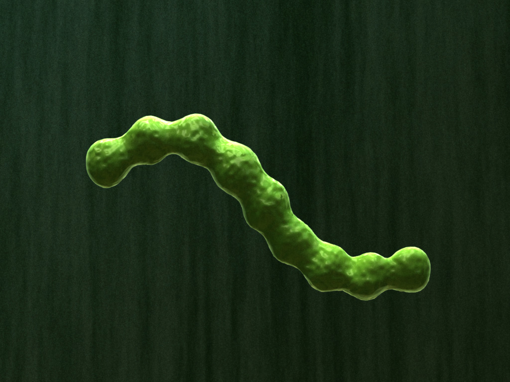bacterial-infection-parasite-3d-model-1