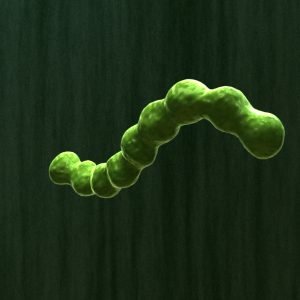 bacterial-infection-parasite-3d-model-3