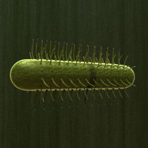 e-coli-3d-model-bacteria-1