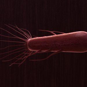 Flagella Bacteria 3D Model