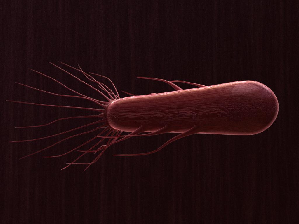 flagella-3dmodel-bacteria-1