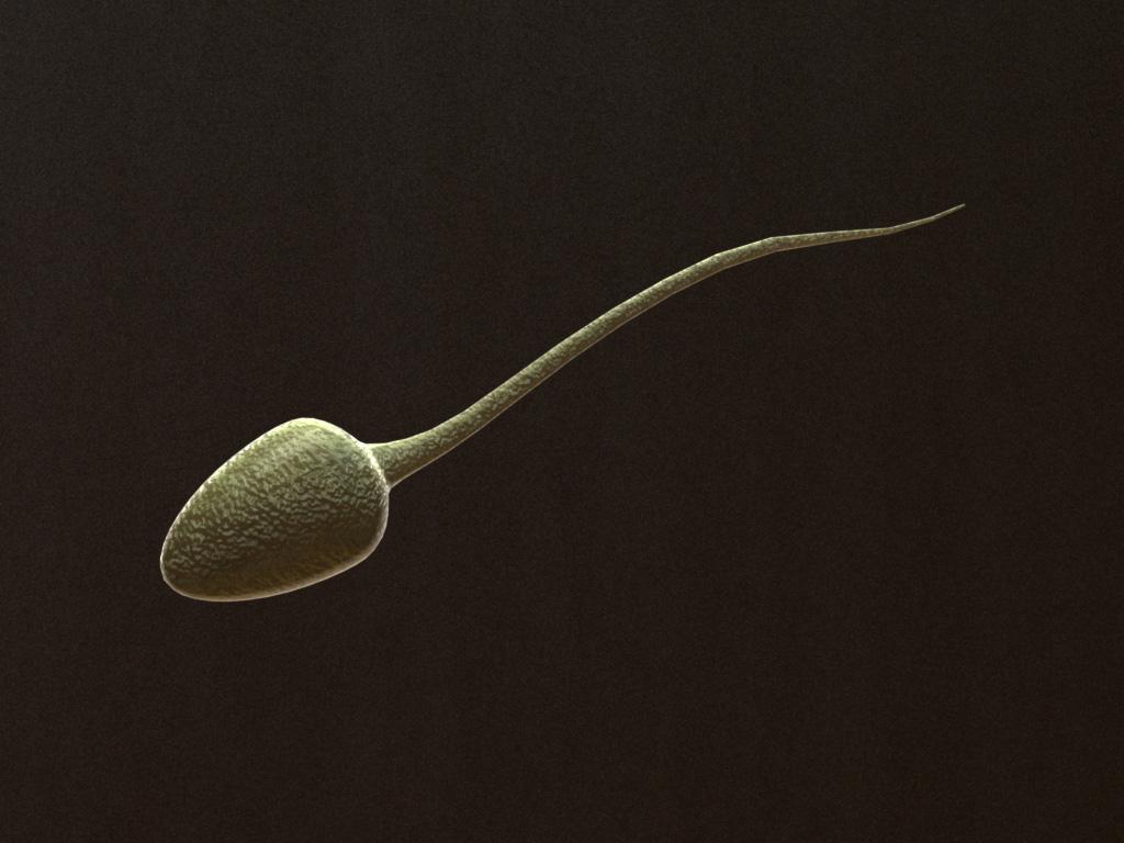 sperm-3d-model-2