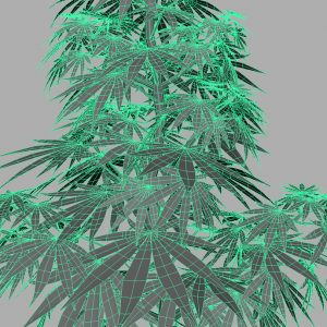 cannabis-3d-model-sativa-10