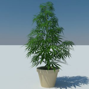 cannabis-3d-model-sativa-2