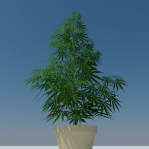 cannabis-3d-model-sativa-6