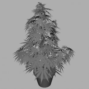 cannabis-3d-model-sativa-7