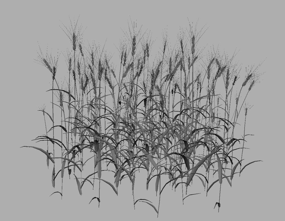 Wheat 3D Model - 3D Models World