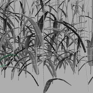 wheat-3d-model-durum-13