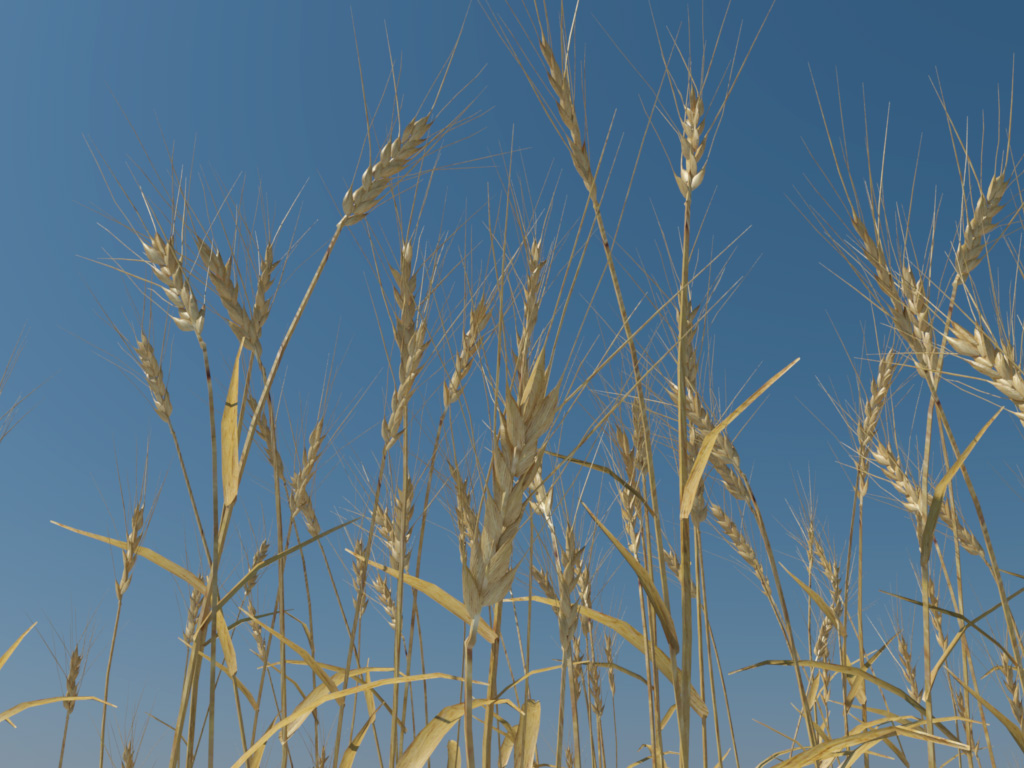 Wheat 3D Model - 3D Models World