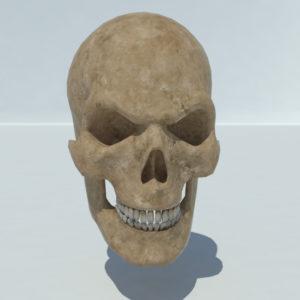angry-skull-3d-model-1
