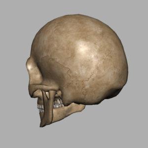 angry-skull-3d-model-10