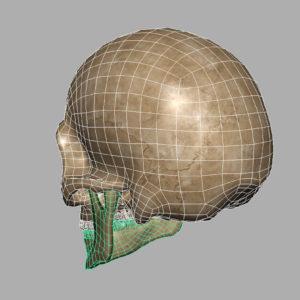 angry-skull-3d-model-11