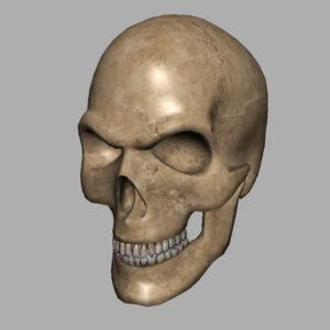angry-skull-3d-model-12