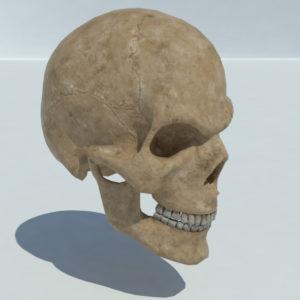 angry-skull-3d-model-2