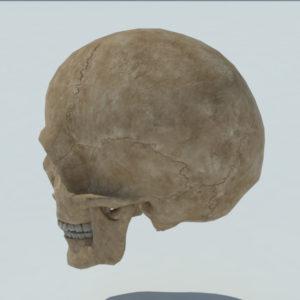 angry-skull-3d-model-4