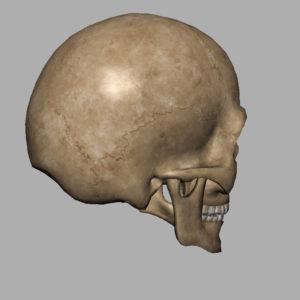 angry-skull-3d-model-8
