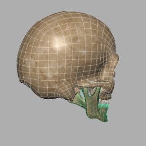 angry-skull-3d-model-9