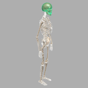 human-skeleton-3d-model-10