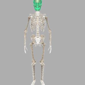 human-skeleton-3d-model-11