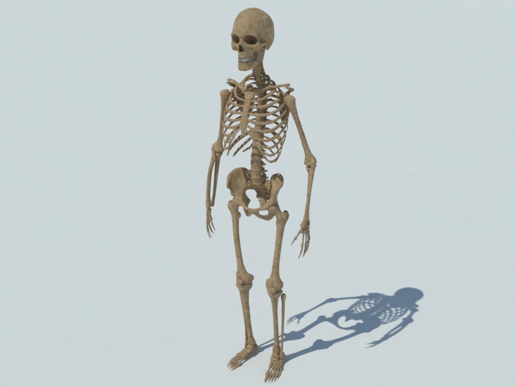 Human Skeleton 3d Model Realtime 3d Models World