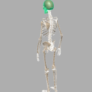 human-skeleton-3d-model-8