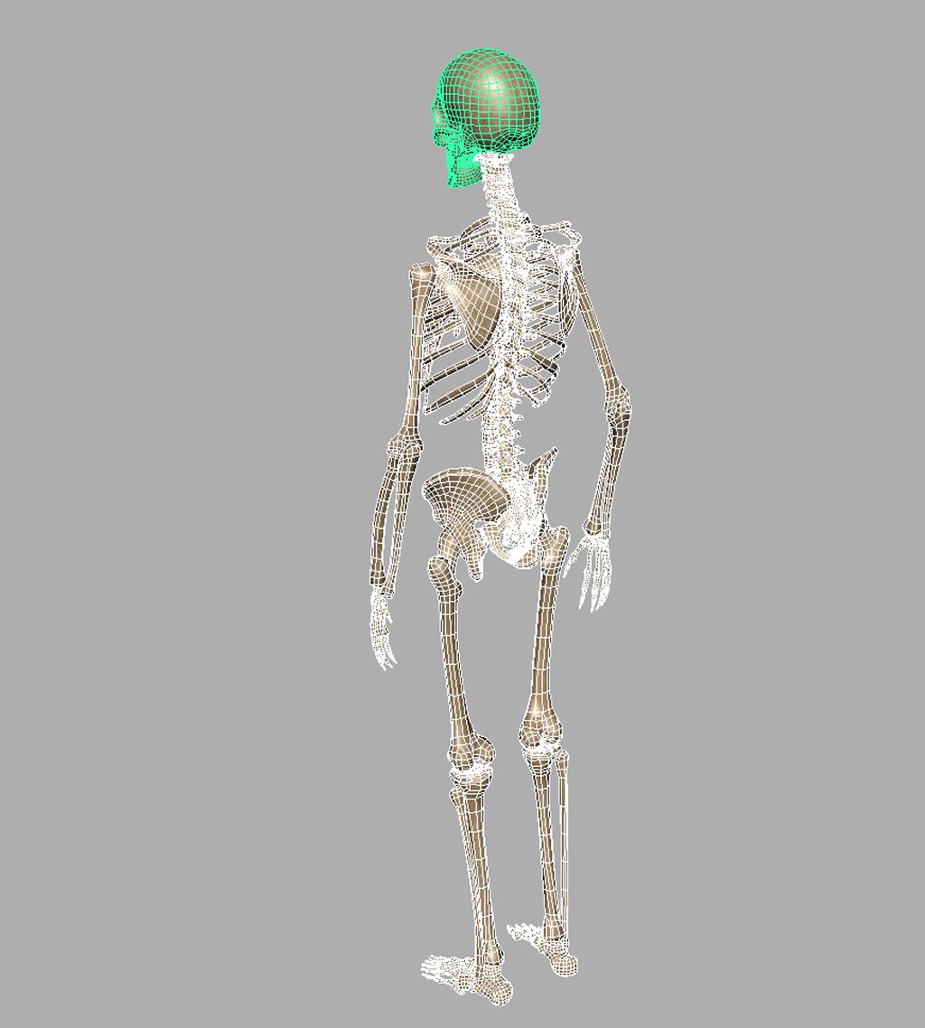 Unity 3d Human Models download