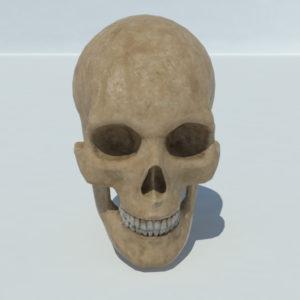 human-skull-3d-model-1