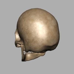 human-skull-3d-model-10