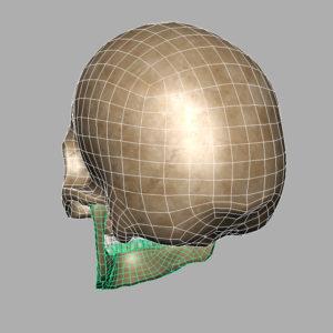 human-skull-3d-model-11