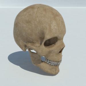 human-skull-3d-model-2
