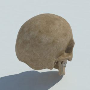human-skull-3d-model-3
