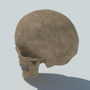 human-skull-3d-model-4