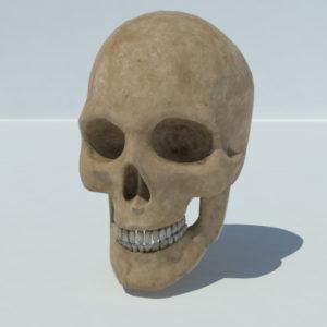 human-skull-3d-model-5