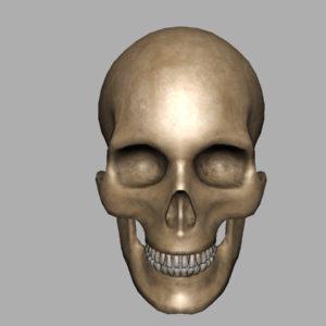 human-skull-3d-model-6