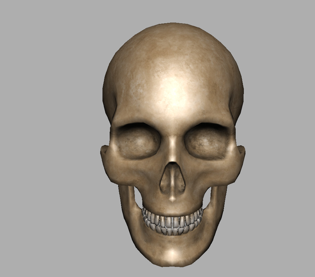 Human Skull 3D Model - Realtime - 3D Models World