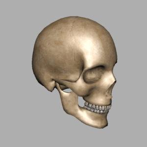 human-skull-3d-model-8