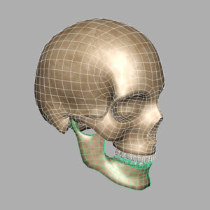 human-skull-3d-model-9