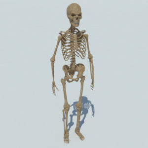 skeleton-halloween-3d-model-1