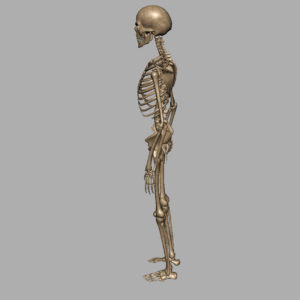skeleton-halloween-3d-model-10