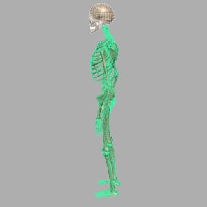 skeleton-halloween-3d-model-11