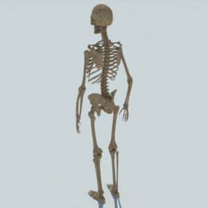 skeleton-halloween-3d-model-3