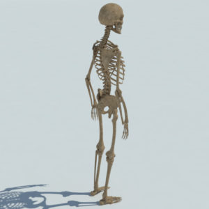 skeleton-halloween-3d-model-4