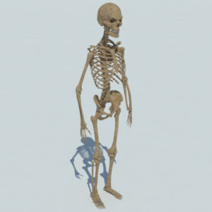 skeleton-halloween-3d-model-5