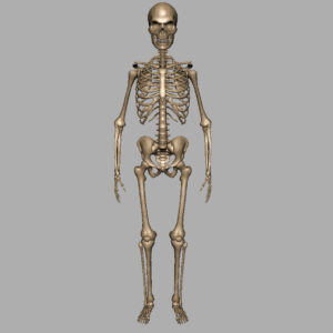 skeleton-halloween-3d-model-6